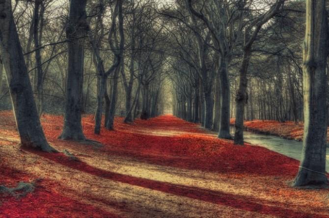 Rode-Loper-Rick-Akkerman-Publicatie-AC-15-02-2014