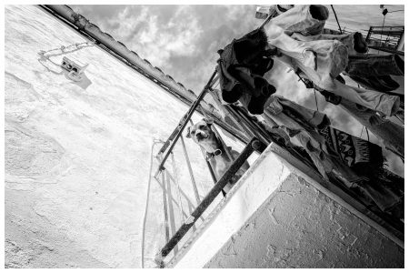 hond-balkon-ibiza-rick-akkerman-fotografie