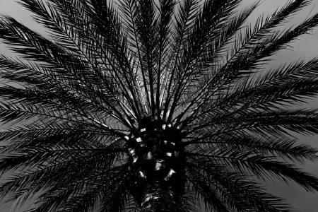 palm-costa-blanca-foto-rick-akkerman